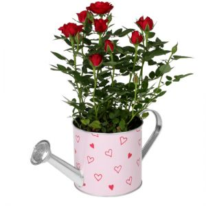 Watering can hearts